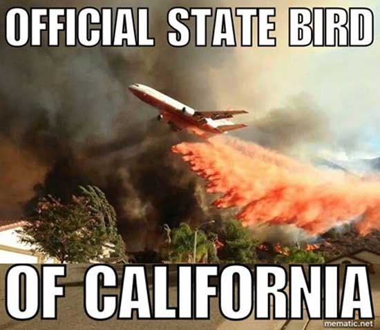 Official State Bird of California via iloveyouyouhateme